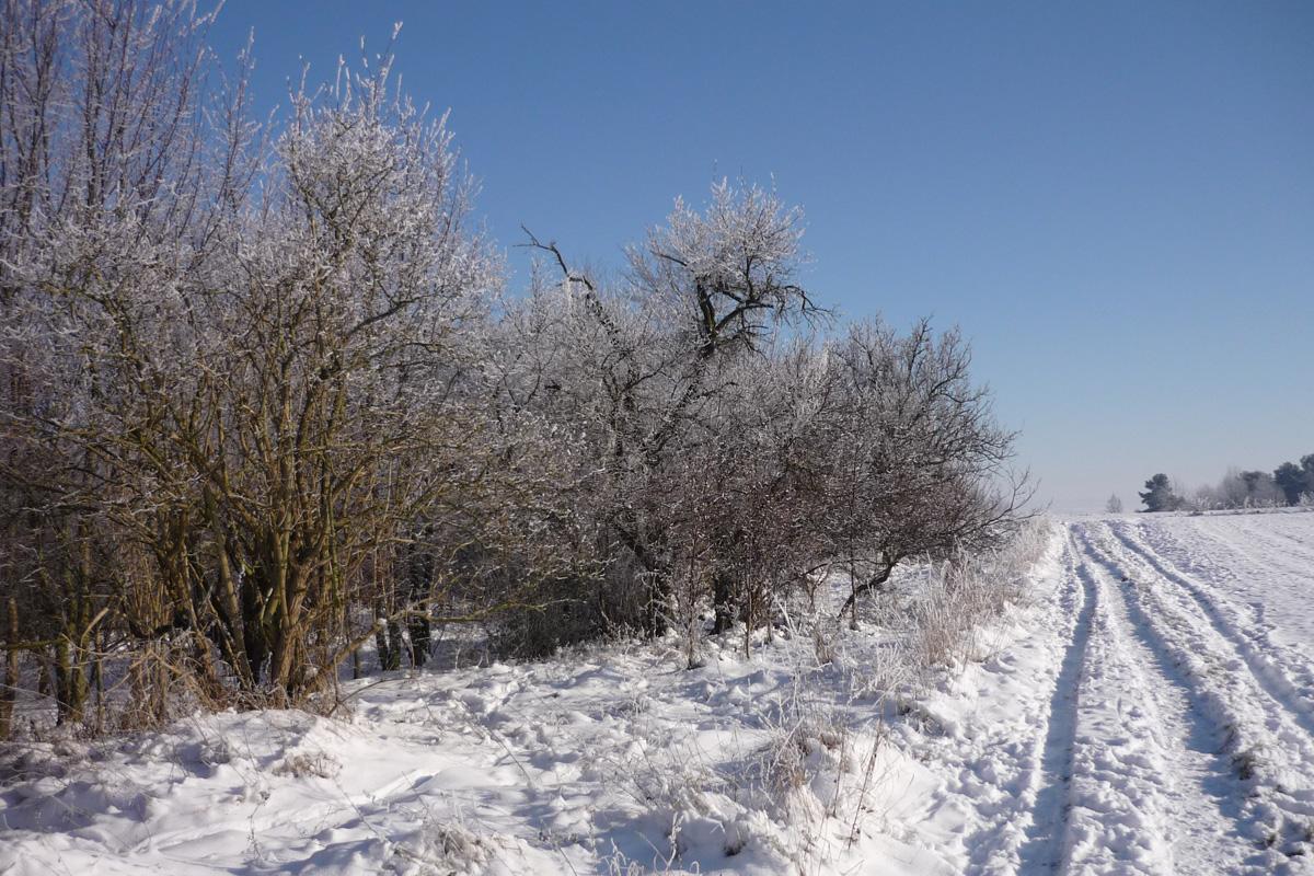 Lebensr ume der wetterau habitat und biotop der arten for Fischteich im winter