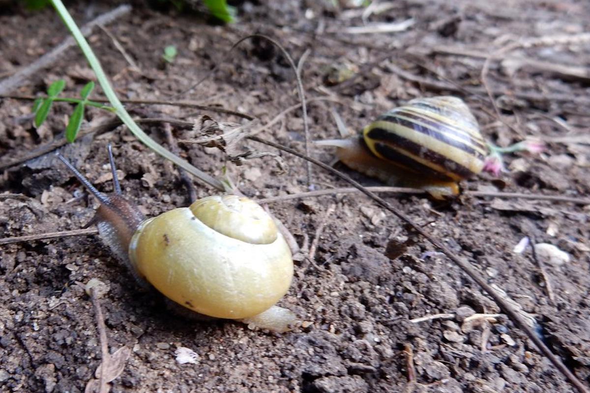 Weichtiere Und Würmer Der Wetterau Vorkommen U Habitat